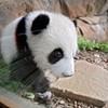 Panda = Profits