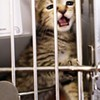 Memphis Animal Services Shows Some Improvement