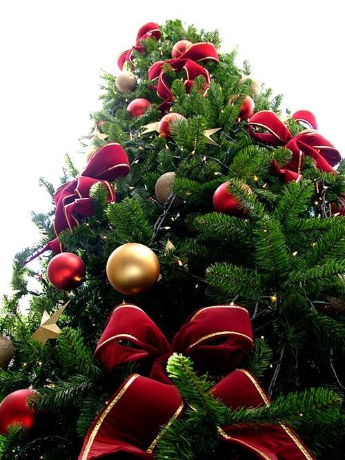 Christmas_tree_sxc_hu.jpeg