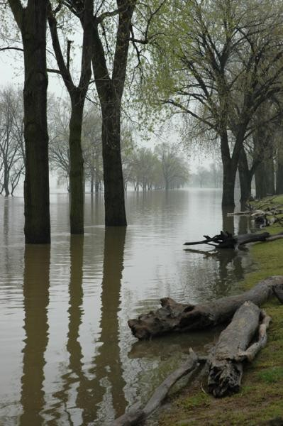 Mississippi River Flood by Saj Crone