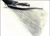 Pinkney Herbert's Wing