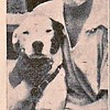 Poochie — Memphis' Number-One Dog Hero