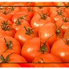 Tomato Festival This Weekend