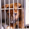 Rotary Club Study Points to Big Problems at Animal Shelter