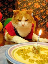 mad_cat_birthday_party_jpg-magnum.jpg