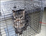 Sheriff's deputy Patrick Siano caught this feral cat in his neighborhood.