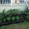 Stacey's Herb Garden