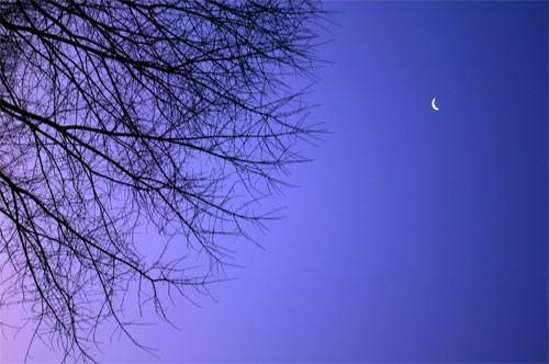 moonskytrees070220.jpg