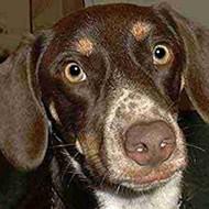 """Saturday is """"Senior Day"""" at Memphis Humane Society"""