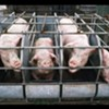 Tennessee Ag Gag Bill Is Back