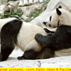 Memphis Pandas Can't Get It On
