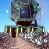WKNO to Air Memphis Documentary on Cotton