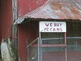 clarke_we_buy_pecans.jpg