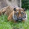 Tigers 14, Rice 10