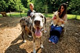 Tina Hamilton (left) and her Great Dane, Dominic, relax with Allison Tribo and her dog, Foxy, inside Overton Bark dog park. - BRANDON DILL