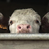 TN General Assembly Passes Bill to Stifle Animal Cruelty Investigations