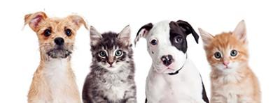 Fur friends and human helpers - ADOGSLIFEPHOTO | DREAMSTIME.COM