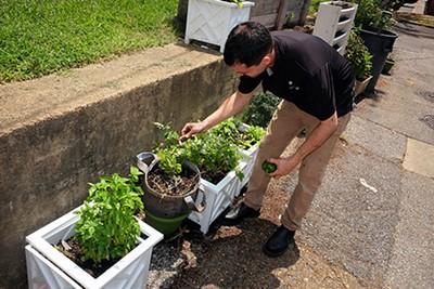 Josh Steiner picks fresh vegetables from the garden.