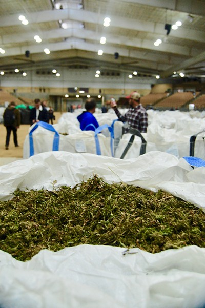 An enormous bag of CBD biomass - at last week's International Hemp Auction and Market - TOBY SELLS