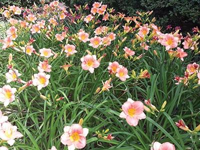 last_word_flowers.jpg