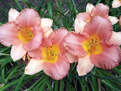 lastword_flowers2.jpg