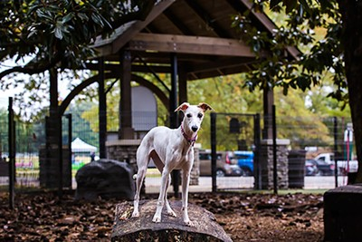 Overton Park officials said they expect 1 million visitors there by the end of the year. Amenities like Overton Bark (above) and the park's playground have recently reopened after COVID-19 restrictions. - OVERTON PARK CONSERVANCY/FACEBOOK