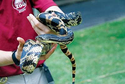 flyby_snake_zoo.jpg