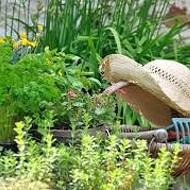 Herbal and Vegetable Gardening