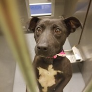 Memphis Pets of the Week (June 20-26)
