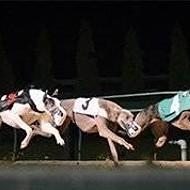 Federal Legislation Would Ban Greyhound Racing Nationwide