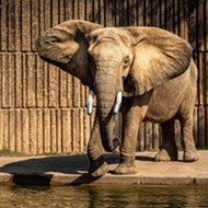 """Memphis Zoo Officials Rebut """"Worst Zoos for Elephants"""" Ranking"""