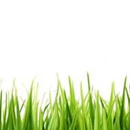 Vendor in the Grass