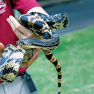 Memphis Zoo Plans to Save Rare Louisiana Pine Snake