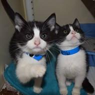 Memphis Pets of the Week (Nov. 17-23)