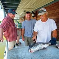 Now out: <i>Reel Masters</i> and <i>Art of Dining in Memphis 3.</i>