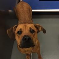 Memphis Pets of the Week (July 20-26)