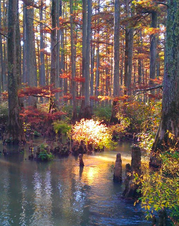 Wolf River in Autumn - WOLF RIVER CONSERVANCY