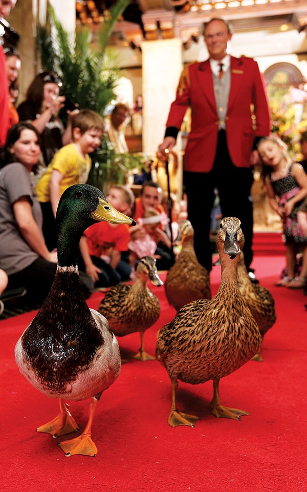 Peabody Ducks - THE PEABODY MEMPHIS