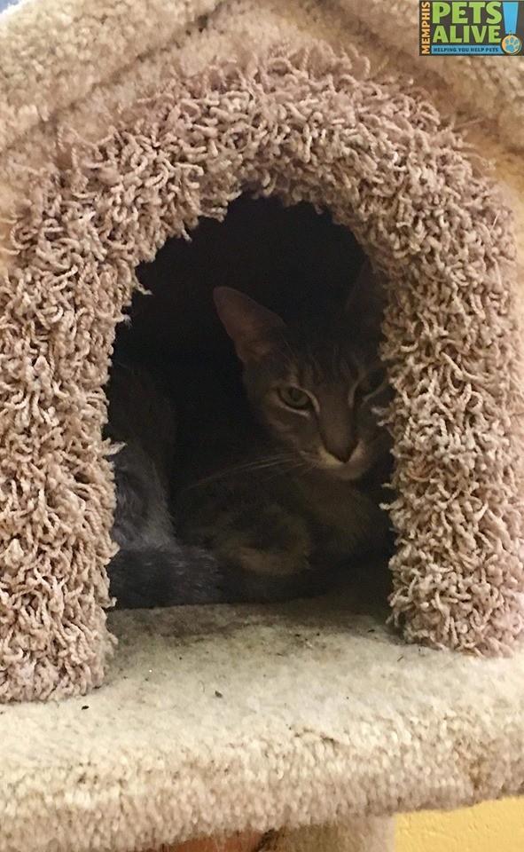 kittykat4.jpg