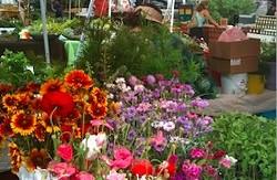 crop_botanic_garden_sale.jpg