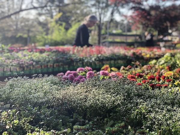 Memphis Botanic Garden Spring Plant Sale