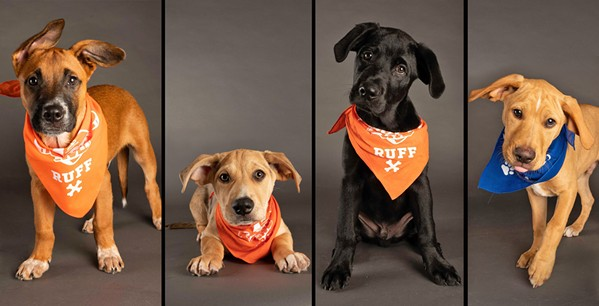 (l to r) Puppy Bowl competitors Pluto, Vinnie, Tank, and Jiffy - CHARLIE'S CRUSADERS PET RESCUE