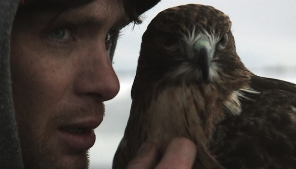 Cillian Murphy being upstaged by a falcon in Aloft.