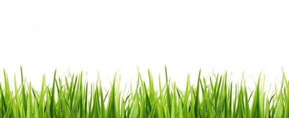 grass_border_3.jpg