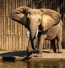 "Memphis Zoo Officials Rebut ""Worst Zoos for Elephants"" Ranking"