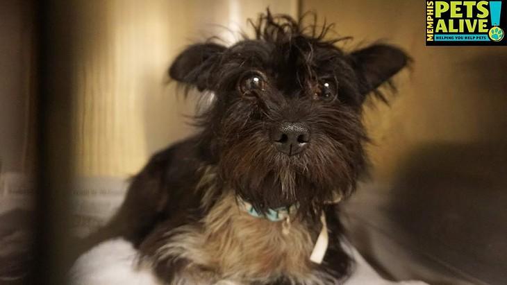 Memphis Pets of the Week (August 16-22)