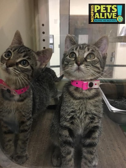 Memphis Pets of the Week (Oct. 25-31)