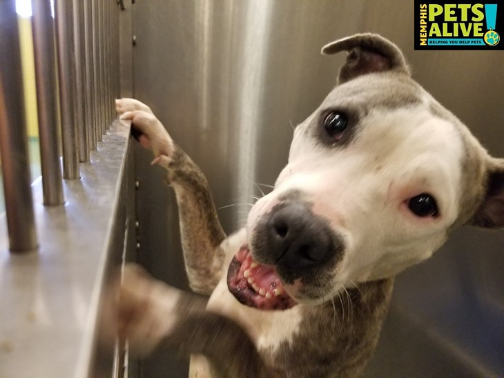 Memphis Pets of the Week (8/20/19-8/26/19)
