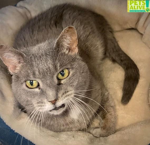 Memphis Pets of the Week (11/26/19-12/2/19)