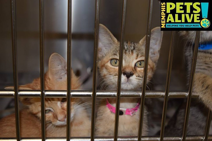Memphis Pets of the Week (Sept. 29-Oct. 5)